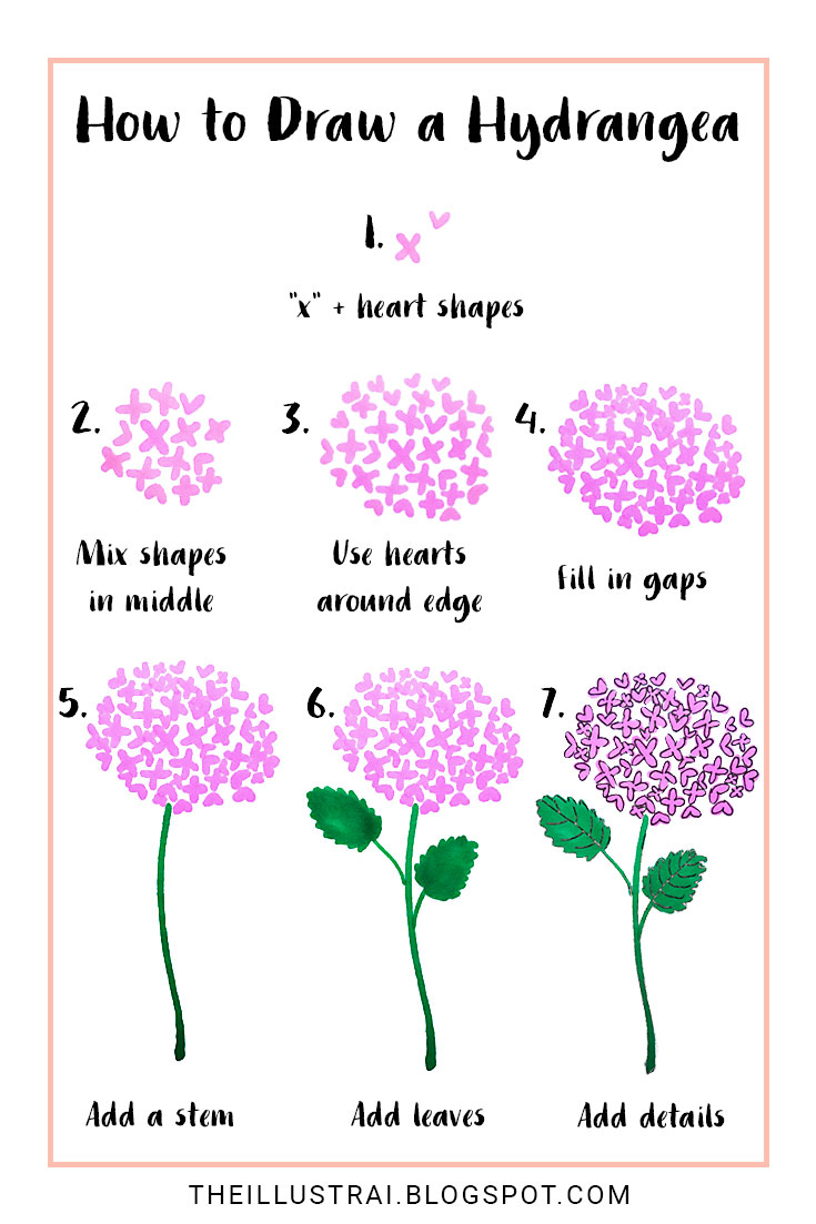 735x1103 How To Draw A Hydrangea