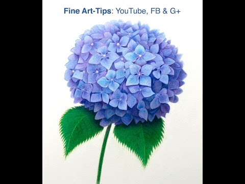480x360 How To Draw A Hydrangea With Color Pencils