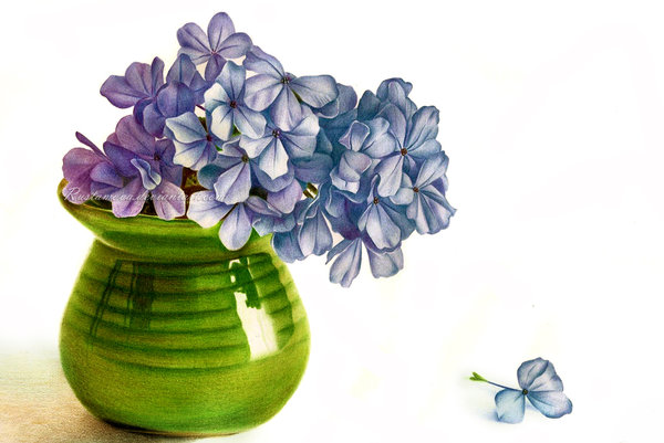 600x401 Hydrangea. Drawing In Pencil By Rustamova