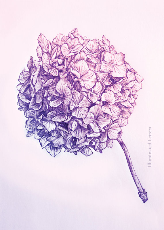 570x800 Image Result For Purple Hydrangea Drawing Art Nouveau