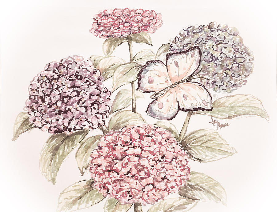 900x689 Hydrangeas Antique Drawing By Jan Marie