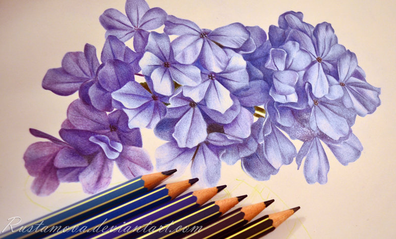 800x484 In The Making. Hydrangea By