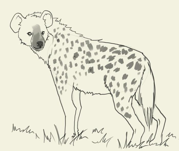 700x593 How To Draw Hyena