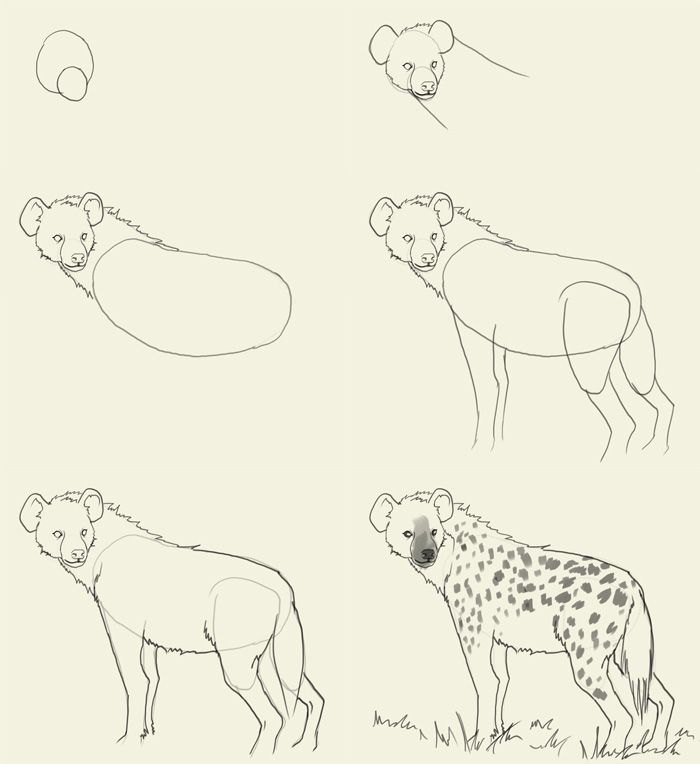 700x764 Image Result For Animal Drawings Simple Sadie's Art Ideas