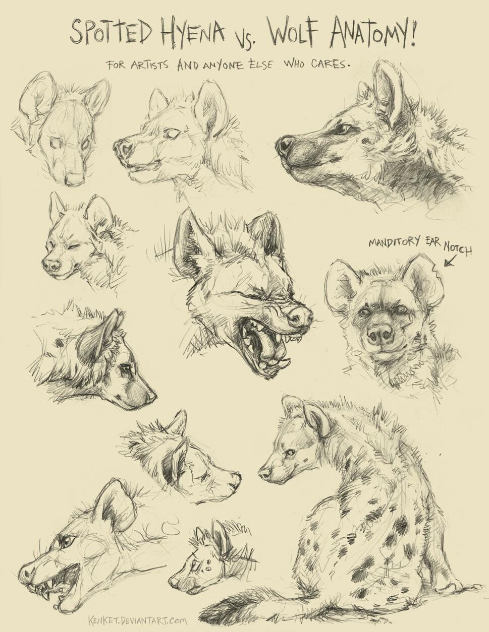 969x1254 Learning To Draw Freya's Hyena Form Workshop Hyena