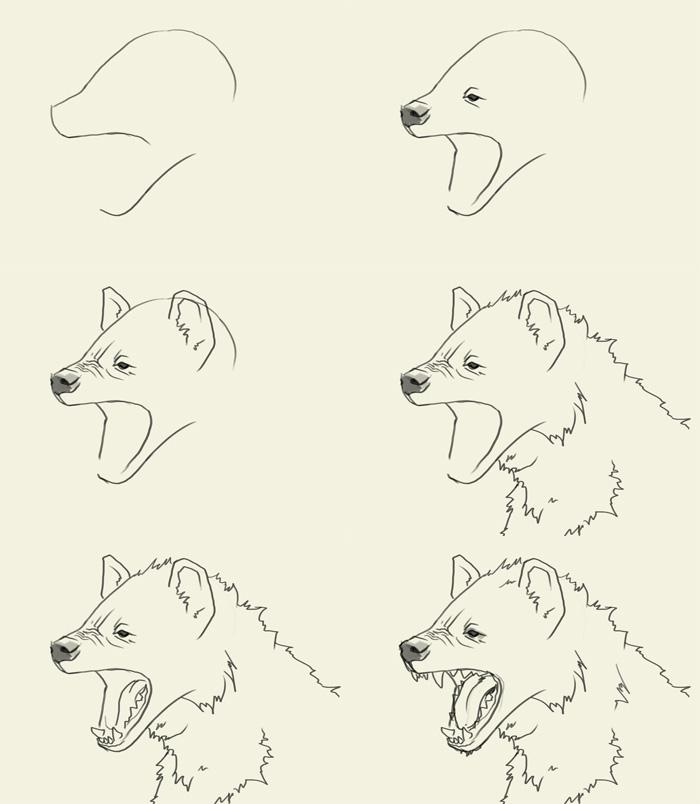 700x804 How To Draw Hyena Head.jpg Zebna Story If Loving Thy