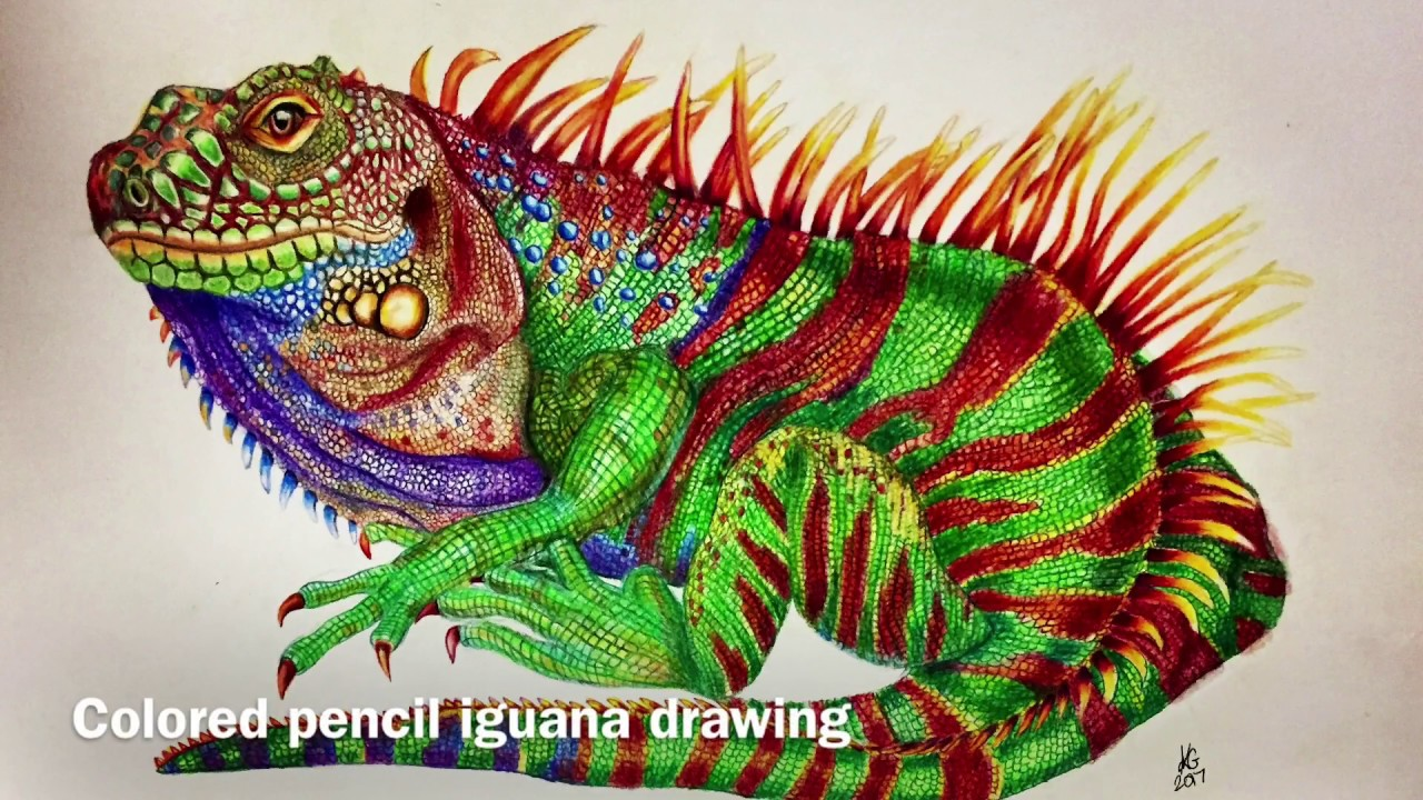 1280x720 Colored Pencil Iguana Drawing By Karen Governale