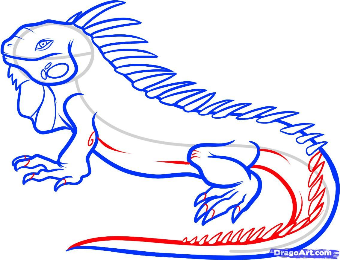 1135x870 Step By Step To Draw An Iguana Cool Drawings