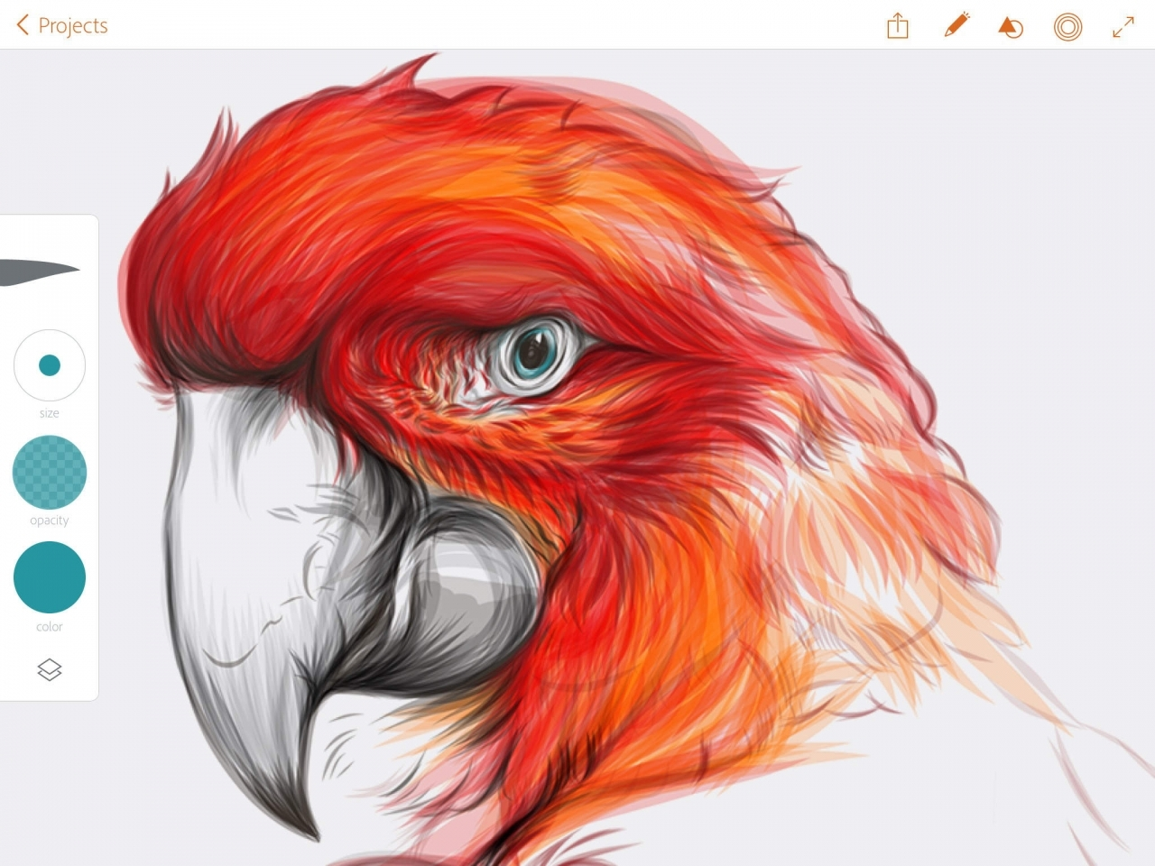 1280x960 New Adobe Illustrator Draw App Now Available For Ipad