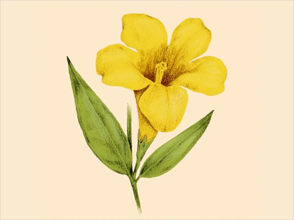 600x450 Flower Drawings