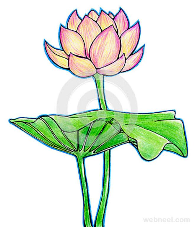 660x770 Flower Drawing 10