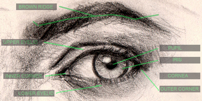 700x351 How To Draw Eyes Structure And Anatomy