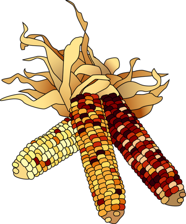 639x771 Colorful Clip Art For The Autumn Season Dried Indian Corn