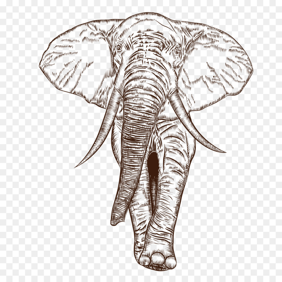 900x900 African Elephant Indian Elephant Drawing