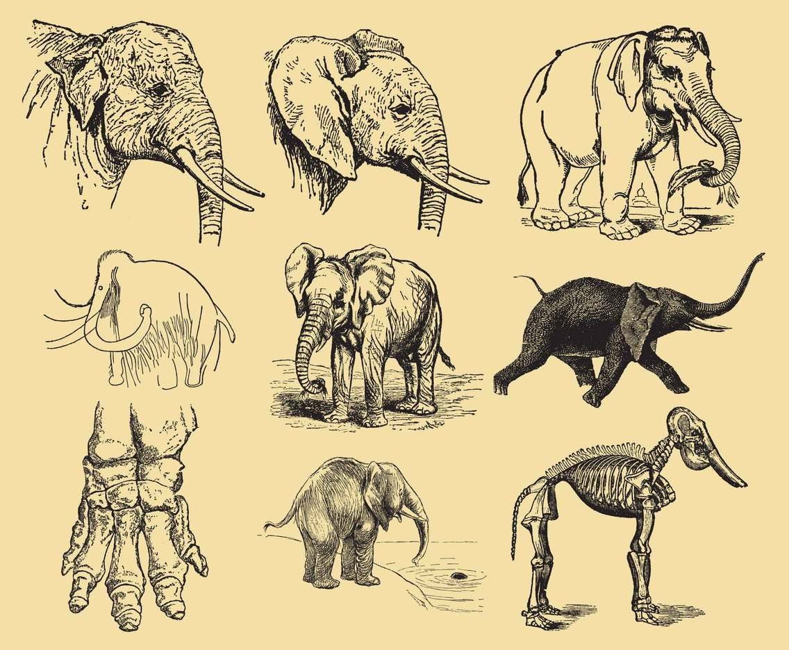 1136x936 Elephant Drawings Vector Art Amp Graphics