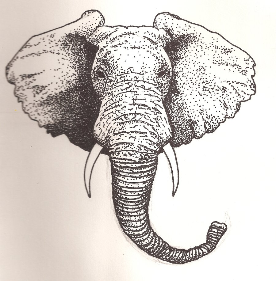 900x917 Elephant Face Front