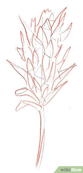 270x558 How To Draw An Indian Paintbrush 8 Steps (With Pictures)