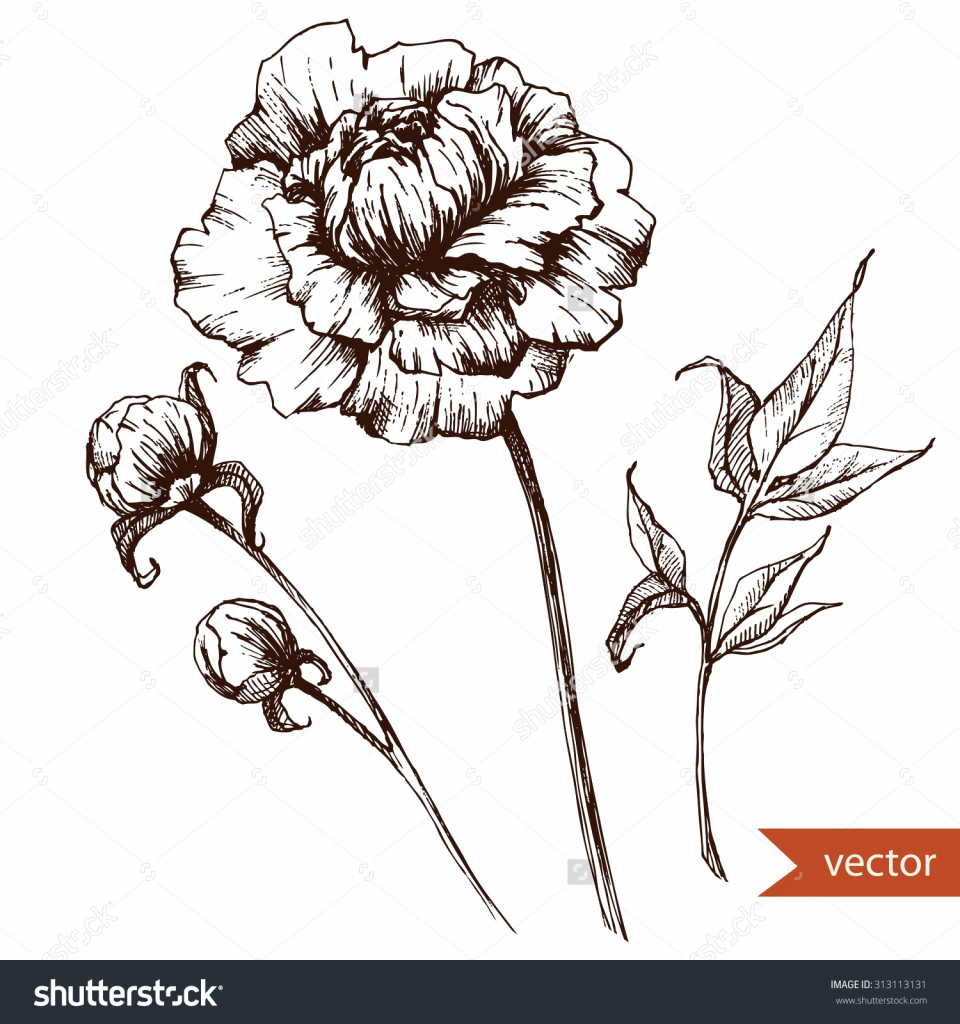 960x1024 Flower Ink Drawing Vector Drawing Pen Ink Drawing Flowers Stock