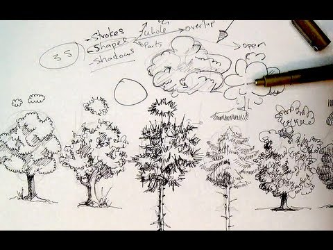 480x360 Pen Amp Ink Drawing Tutorials How To Draw Trees