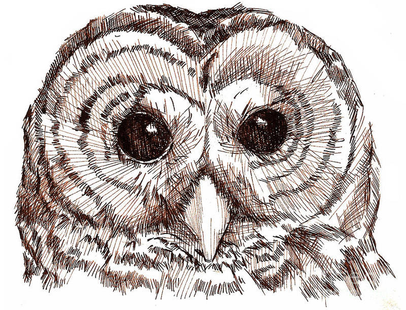 800x612 Pen And Ink Owl Drawing Pen, Ink, Wash Ink