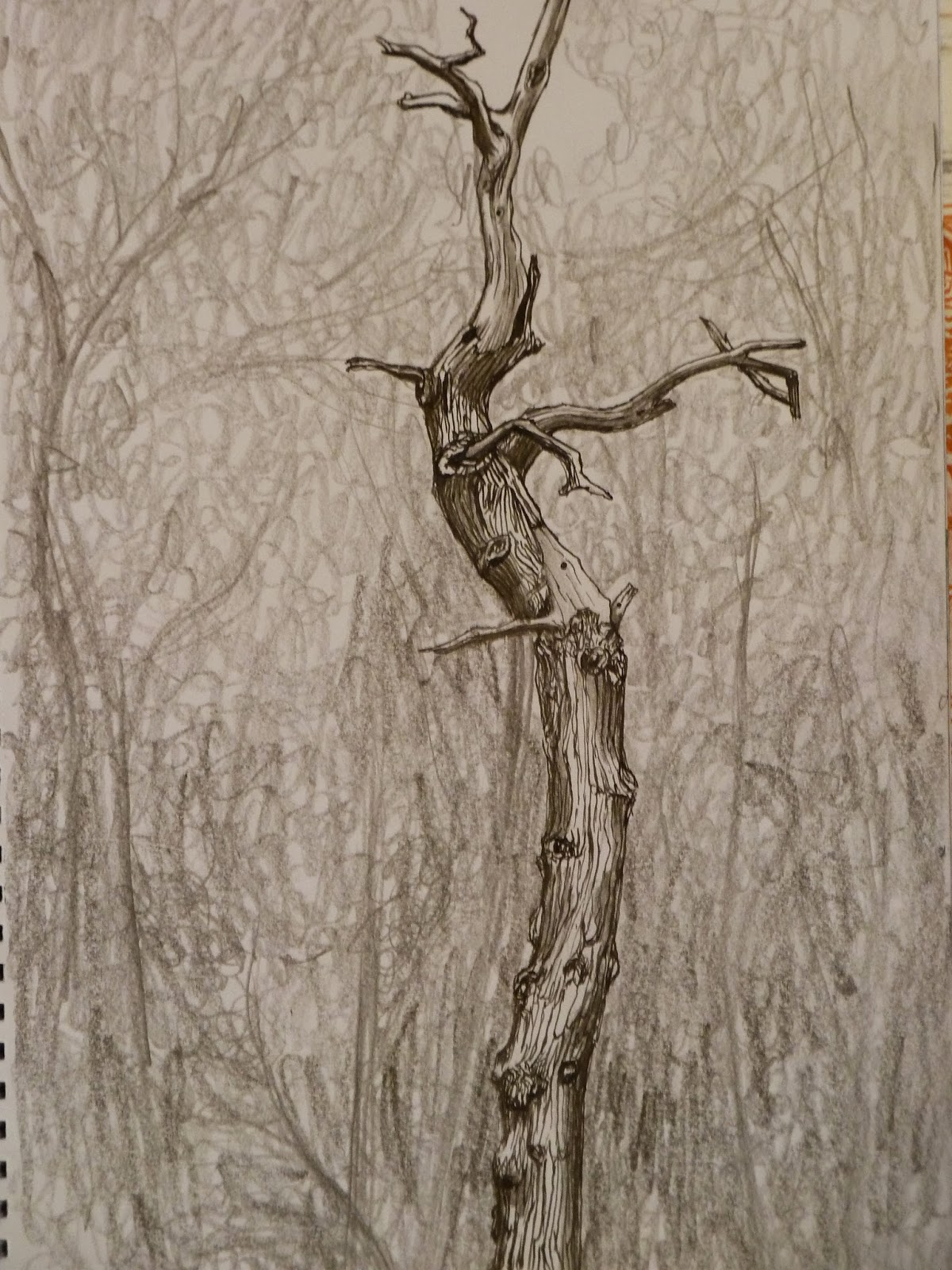 1200x1600 Pen And Ink Tree Bark , Drawn Out In Pencil Then Worked Into