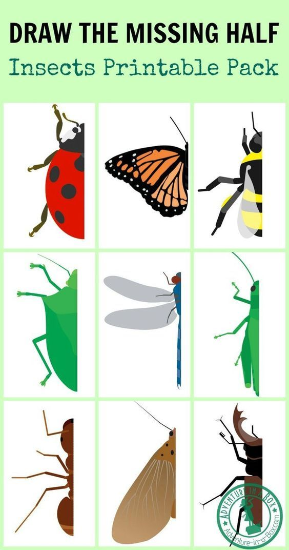 564x1072 Draw The Missing Half Insects Writing Skills, Prompts And Insects