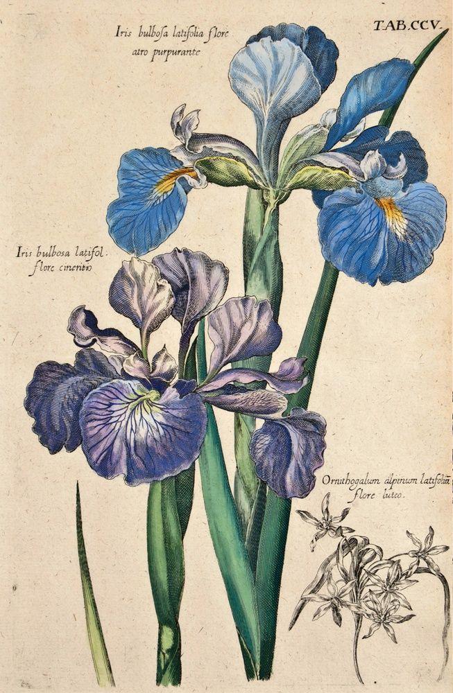 653x1000 Valentini, Michael Bernhard Michael B. Valentini (1657 1729