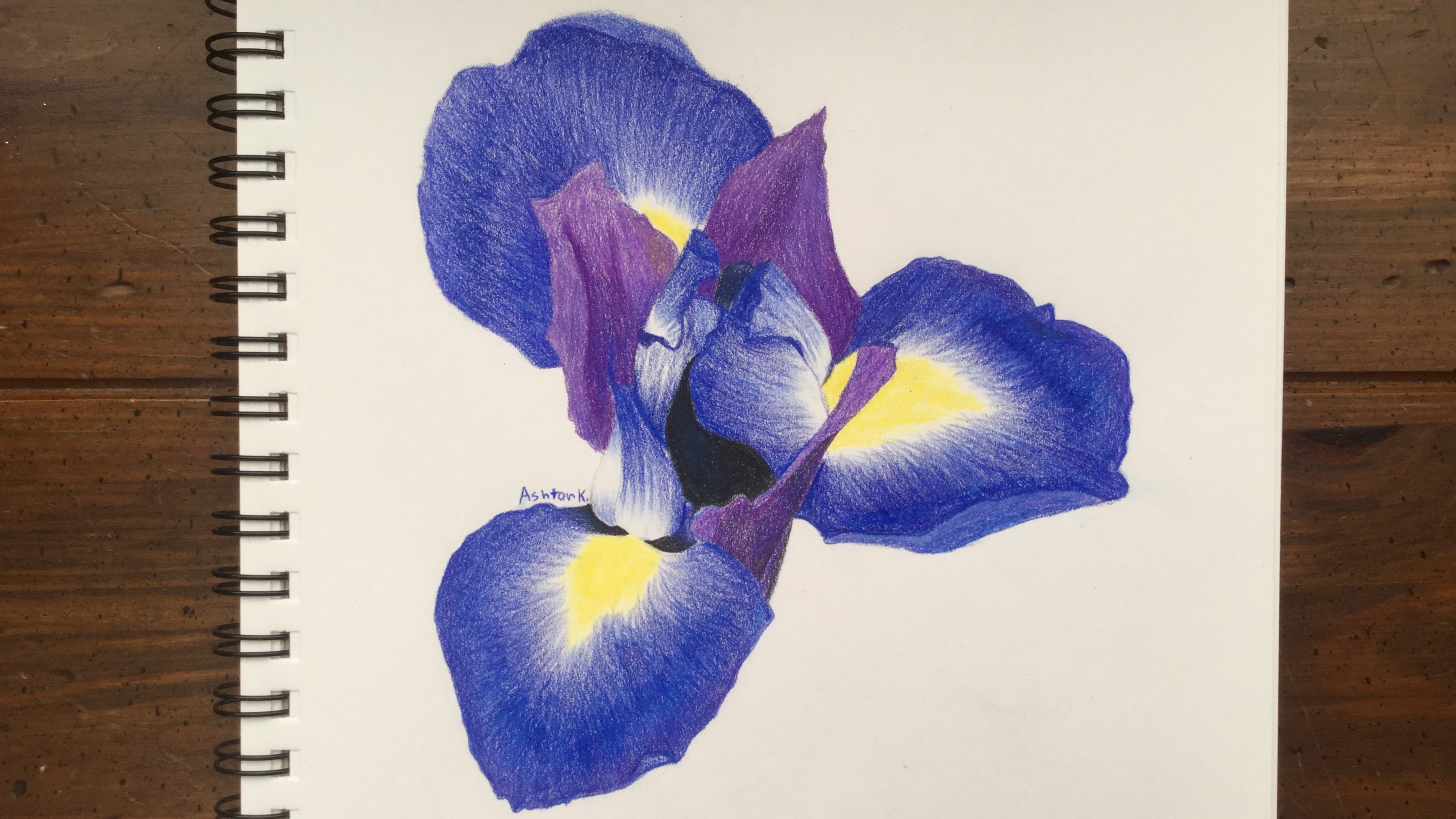 Iris flower drawing at getdrawings free for personal use iris 3251x1829 drawing an iris flower izmirmasajfo
