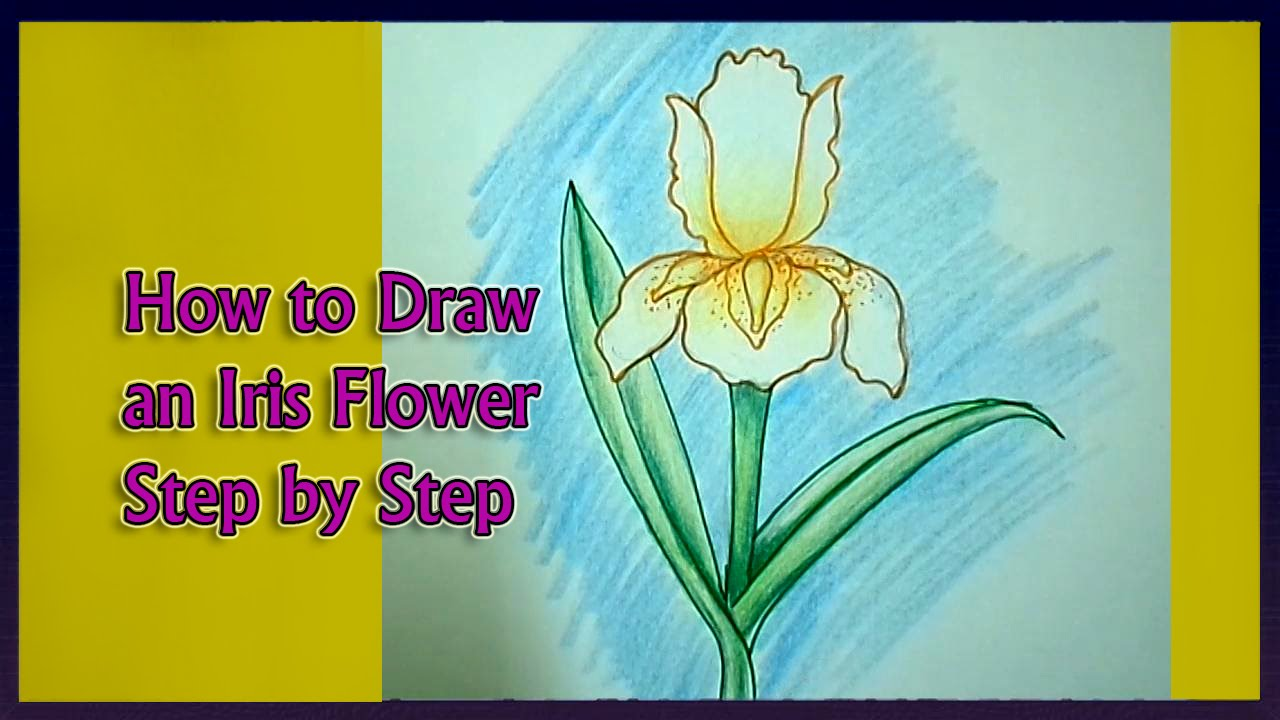 1280x720 How To Draw An Iris Flower Step By Step
