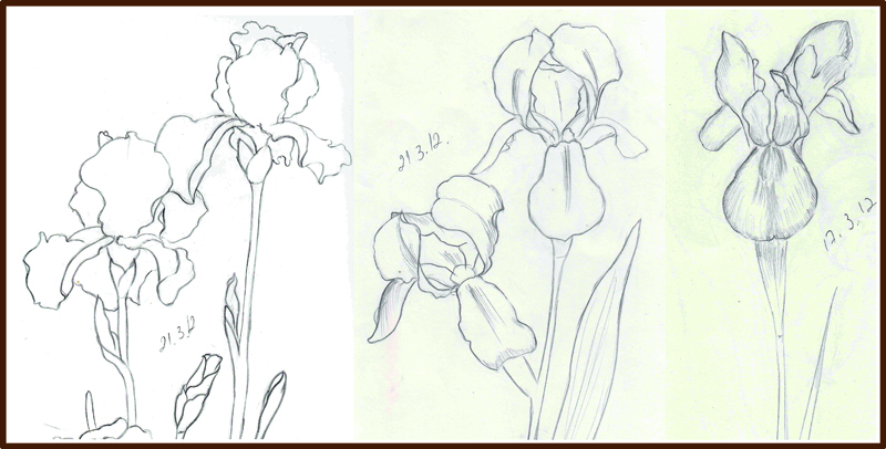 800x406 Weekly Doodles And Tuts Drawing An Iris Flower