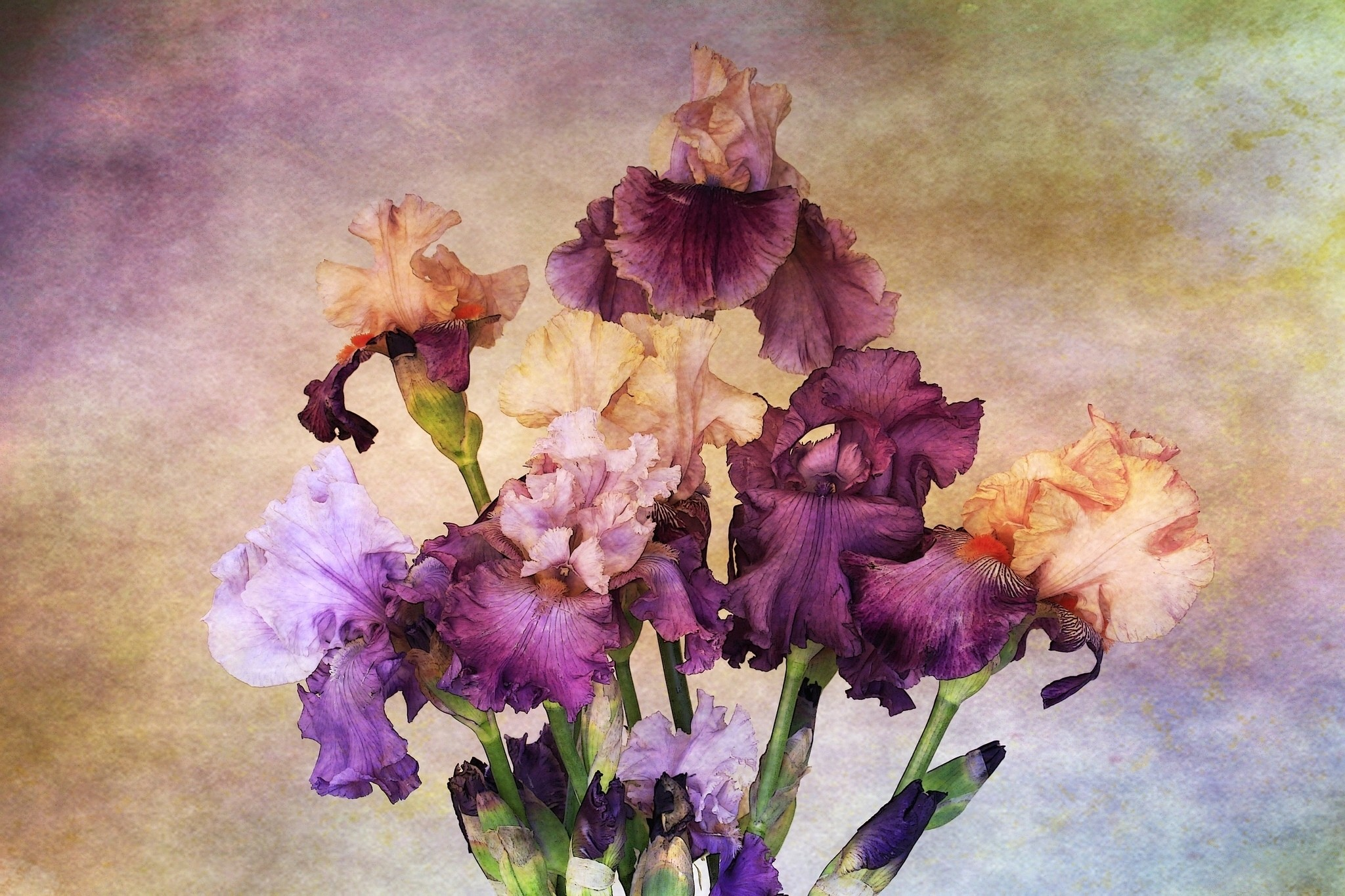 2048x1366 Flowers Flowers Paint Irises Drawing Nature Wallpapers Images