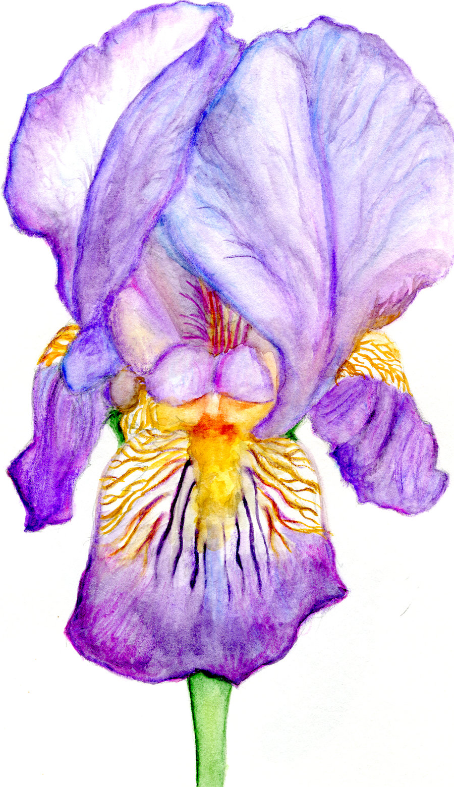 900x1560 Iris Drawing Purple Iris By Midnightpeace Traditional Art