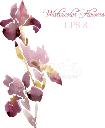 359x440 Irises Drawing By Watercolor Stock Vector