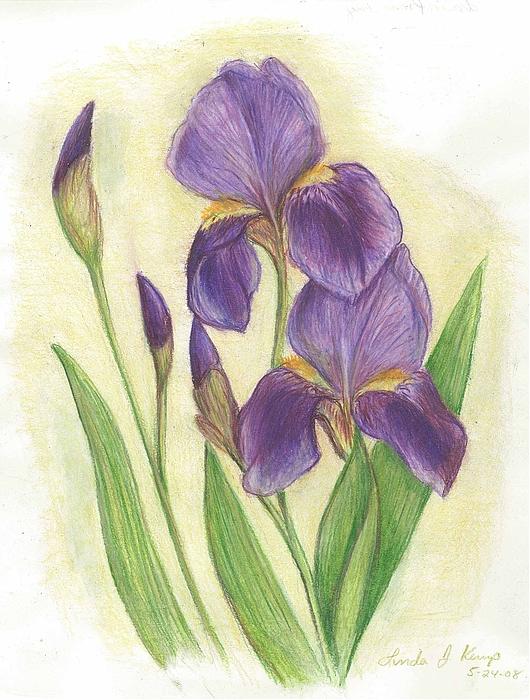 530x700 My Purple Irises Drawing By Linda Nielsen