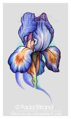 236x393 Pin By Tammy Alene On Iris Flower Art Iris Tattoo