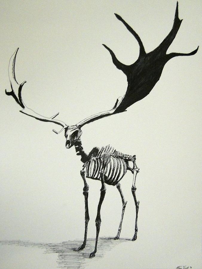 676x900 Irish Elk Skeleton Drawing By Steven Frost
