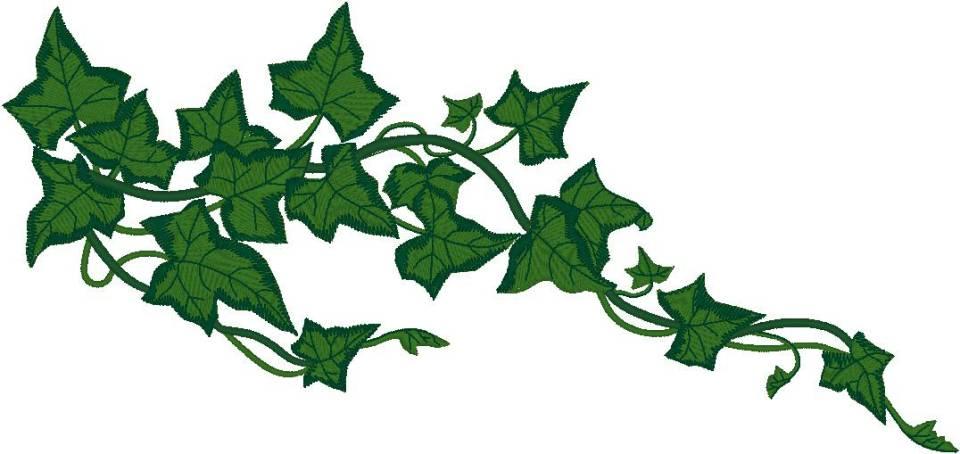 960x454 Leaf Vine Clipart Pumpkin Vine Drawing Pumpkin Vine Clipart