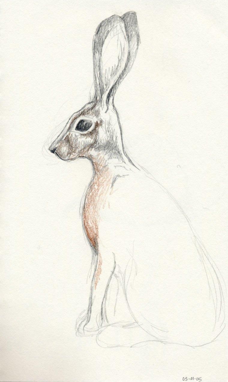 760x1271 Jack Rabbit 10,000 Bad Drawings