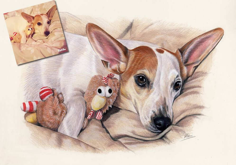 995x695 Jack Russell Drawing Commission Jack Russell Drawings