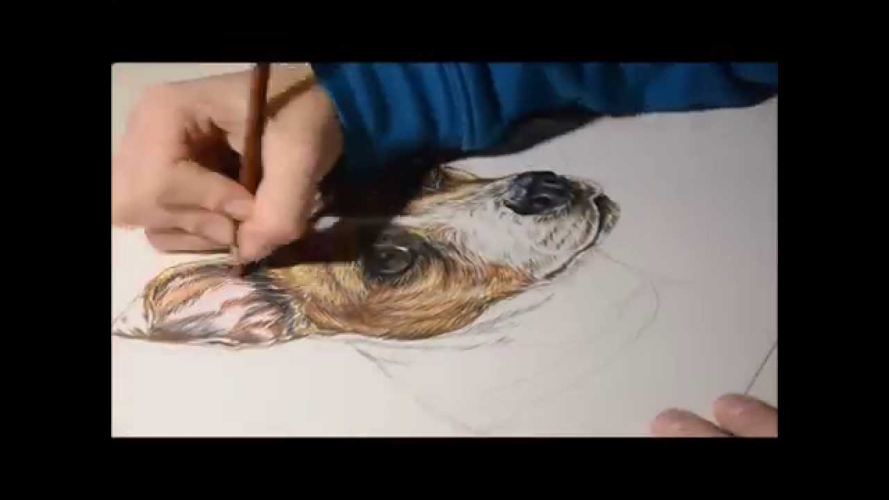 1280x720 Jack Russell Terrier Speed Drawing