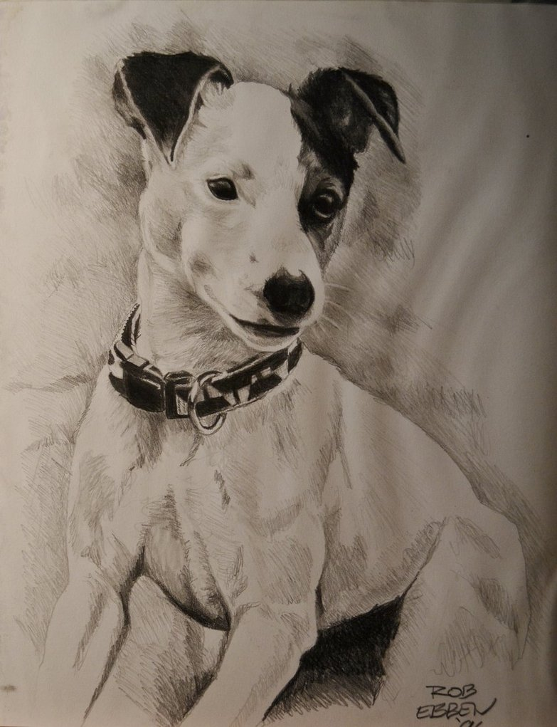783x1021 Jack Russell Terrier By Mreyecandy66