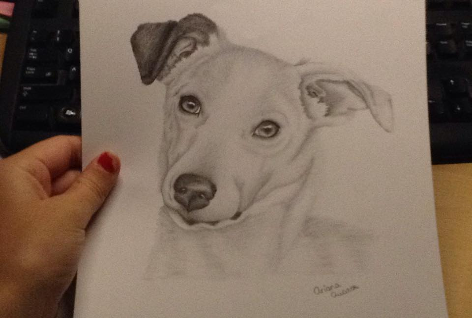 960x648 Jack Russell Drawing (Birthday Present) By Ariana 1997