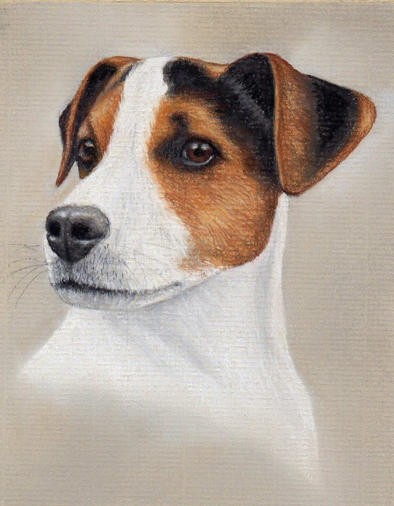 1325x1701 How To Draw A Jack Russell Pastel Pencils Colin Bradley Art