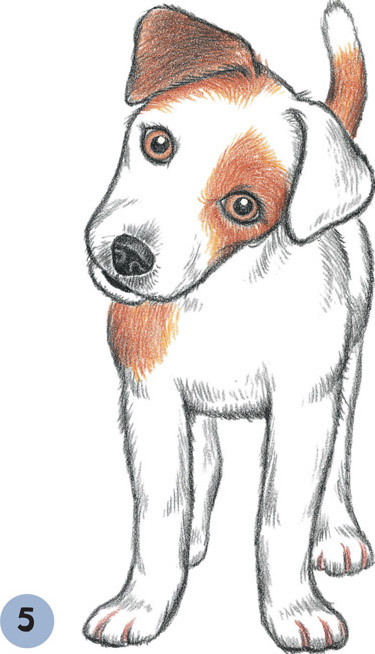 375x654 Image Result For Drawing Jack Russell Terrier Drawing Classes