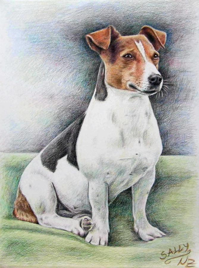 669x900 Jack Russell Terrier Drawing By Nicole Zeug