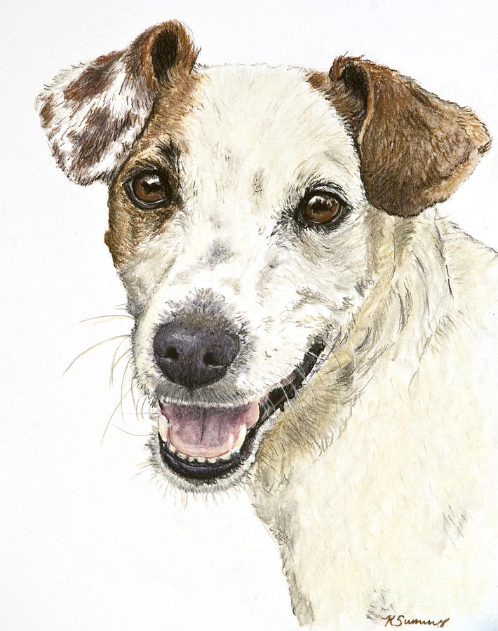 710x900 Jack Russell Terrier Portrait Painting By Kate Sumners