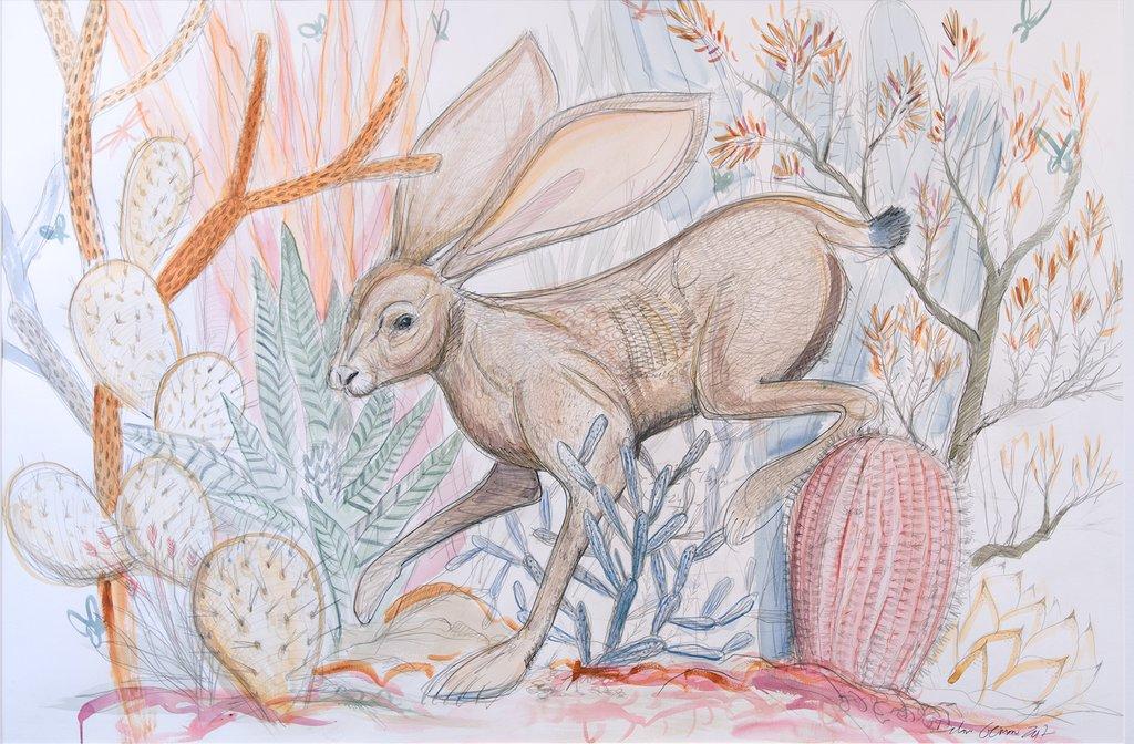 1024x672 Original Jackrabbit And Cacti Drawing Dolan Geiman