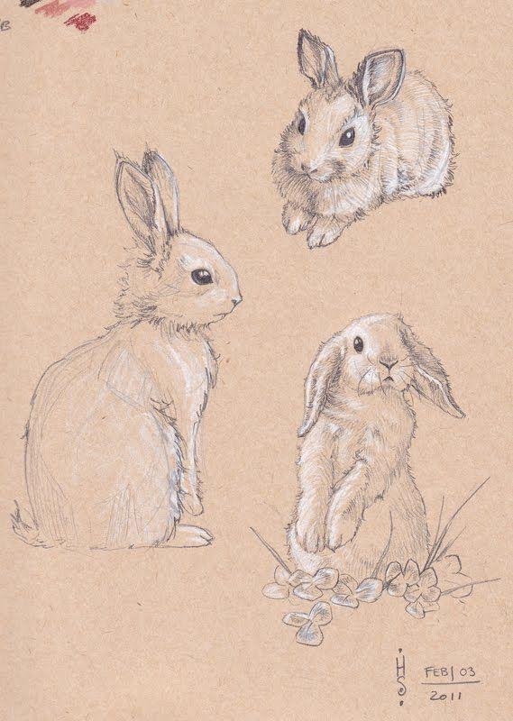 569x800 Rabbit Sketch