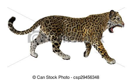 Line Drawing Jaguar : Jaguar animal drawing at getdrawings free for personal use
