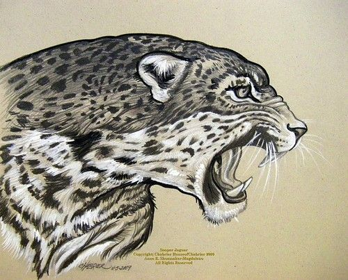 500x403 Image Result For Abstract Jaguar Drawings Abstract Artwork